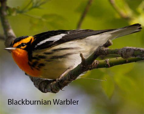 detroit audubon promoting awareness and protection of