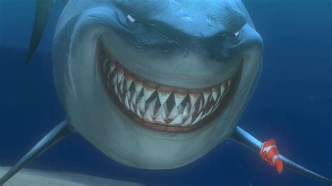 Animated Shark Wallpaper - great white shark hd wallpapers high quality