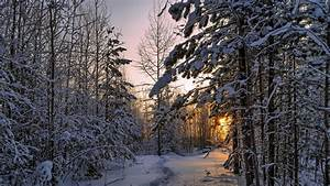 Download Wallpaper 1920x1080 Winter, forest, thick snow ...