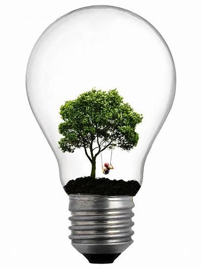 Tree Lightbulb Bulb Deviantart Bulbs Photoshop Inside