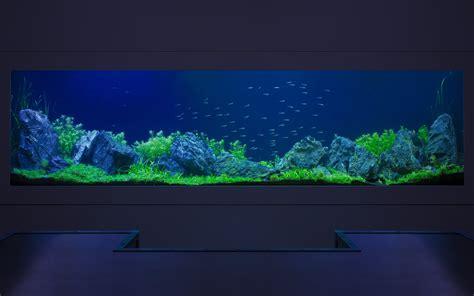 bespoke aquarium design aquarium architecture