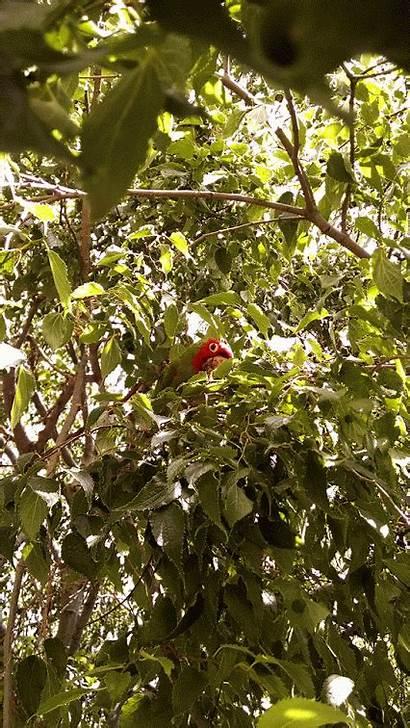 Nutmeg Tree Benefits Trees Forget Don