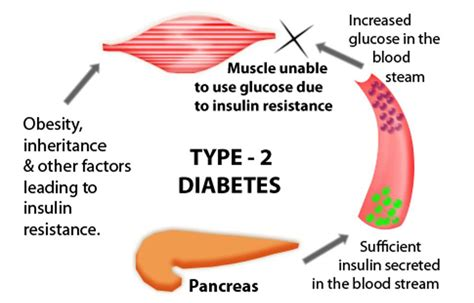 type  diabetes danii foundation