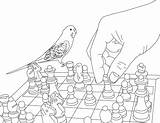 Coloring Pages Parakeet Clarabelle Drag Template sketch template