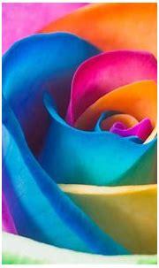 [73+] Rainbow Flower Wallpaper on WallpaperSafari