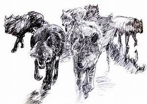 pack of wolves drawing – Sketches, Paintings and Studies ...