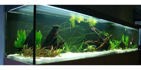 suche aquarium und fische zu verschenken in m 252 nchen fische aquaristik kaufen und verkaufen