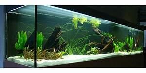 Fische Aquarium Hamburg : suche aquarium fische zu verschenken in m nchen ~ Lizthompson.info Haus und Dekorationen