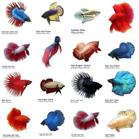 Small Aquarium Fish List Aquarium Design Ideas Interiors Inside Ideas Interiors design about Everything [magnanprojects.com]