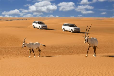 crab canapes platinum luxury desert safari dubai