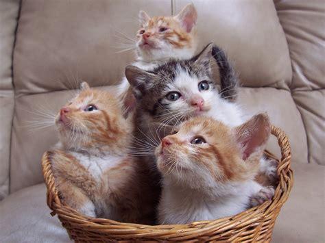 Unique Wallpaper Funny Cats