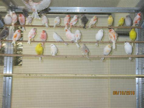 Zur Zeit Lieferbare Vögel