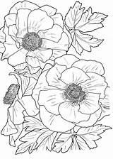 Coloring Flower Adults Printable sketch template