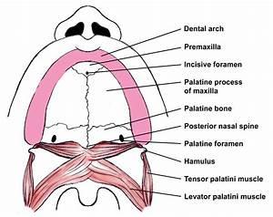 Mouth Diagrams Printable