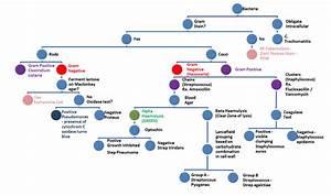 Summary Of Types Of Bacteria