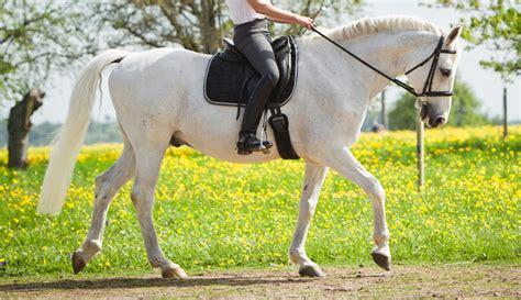 arthrose beim pferd eine degenerative gelenkerkrankung