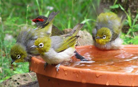bird bath bird watching