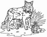 Wolf Coloring Pages Printable Wolves Colouring Activities Wild Animal Drawing Chinook Prints Resolution sketch template