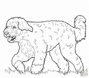 Portuguese Water Dog Coloring Page Free Printable