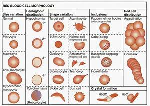 Medical Laboratory And Biomedical Science  Red Blood Cell