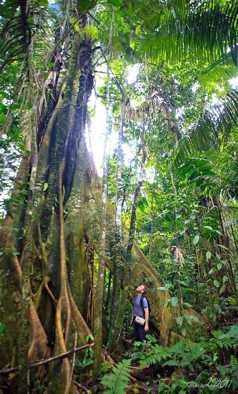 amazon rainforest  location specifed scenes  time