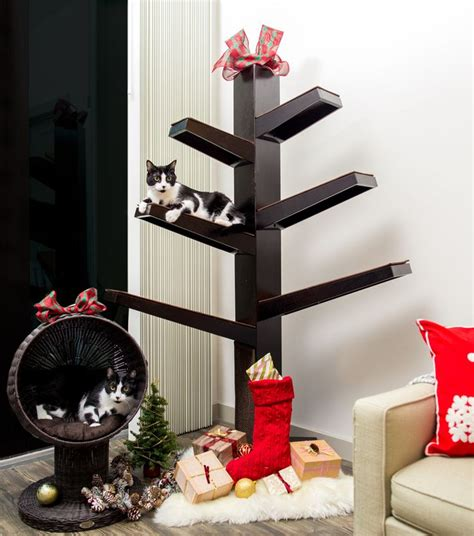 best hypoallergenic christmas trees 26 best animals hypoallergenic images on baby kittens cats and cats