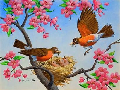 Birds Spring Flowers Trees Drawings Nature Bird
