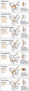 Dog Training Help  U0026 Tips In Dunkirk  U0026 Deale Md