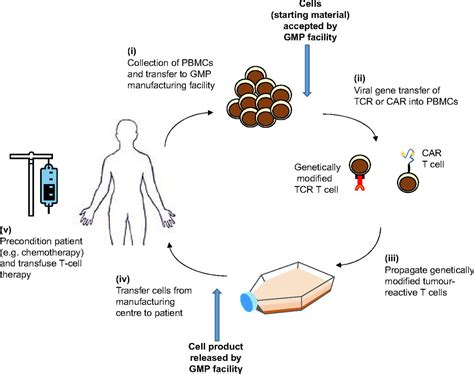 Product Modification Definition And Exle by Genetically Modified T Cells In Cancer Therapy