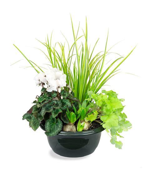 plante exterieur toute saison plante exterieur toute saison photos de conception de