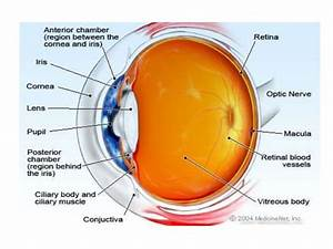 Visual Impairment And Low Vision