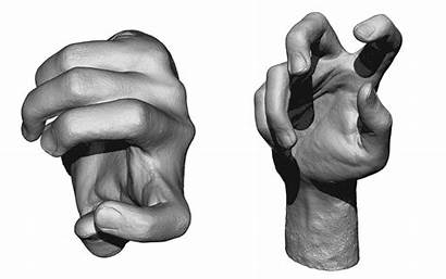 Hand Reference Anatomy 360
