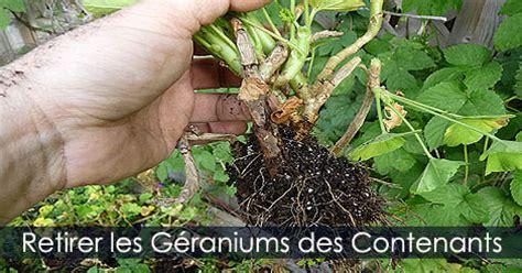 hivernage des g 233 raniums comment garder les g 233 raniums p 233 largoniums