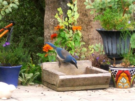 Creating a backyard wildlife habitat   Flea Market Gardening