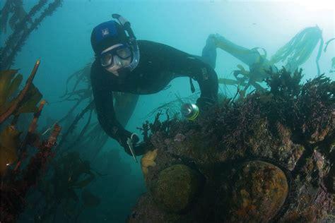 hunt  abalone poachers  northern california