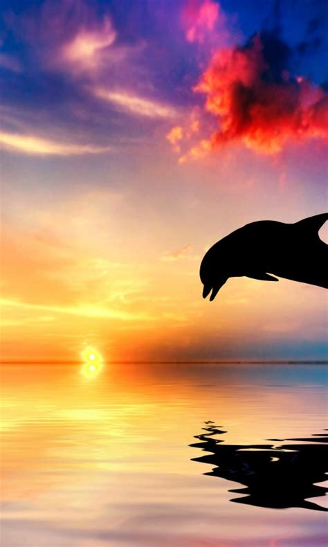 wallpaper dolphin sunset beautiful ocean  animals
