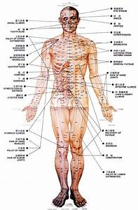 Best 25  Acupuncture Points Chart Ideas On Pinterest