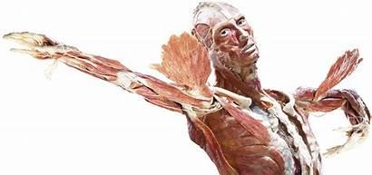 Worlds Amsterdam Gunther Von Hagens Human Bodies