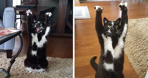 cat  putting  paws   air