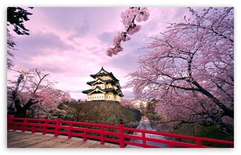 Cherry Blossoms, Japan 4k Hd Desktop Wallpaper For 4k