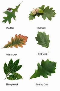 Acorn  U0026 Oak Leaf Preserve  U00bb The Christopher Farm  U0026 Gardens