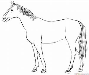 How To Draw A Realistic Horse Step By Step 24369 | ZSOURCE