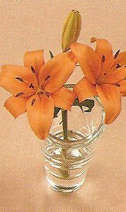 17 Best images about Tiger Lily on Pinterest | Tiger lily ...
