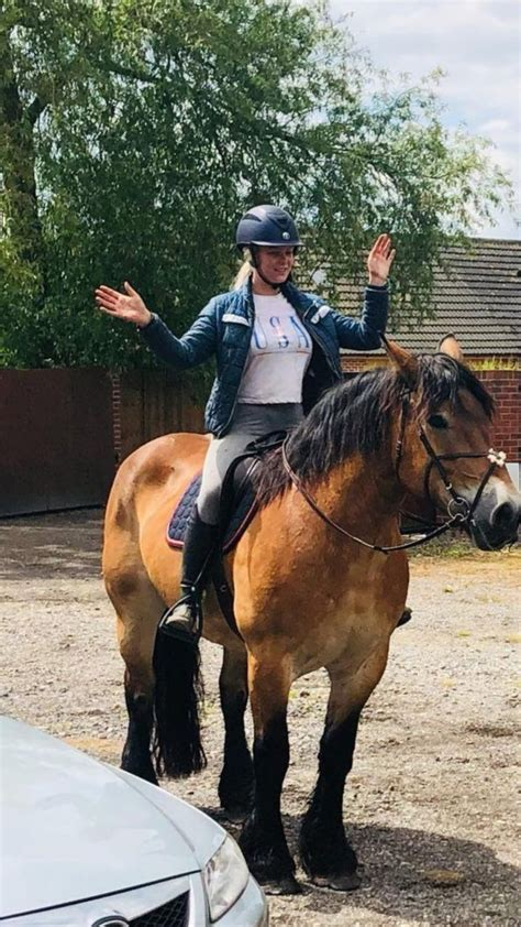 belgian mare draft cheltenham horses pets4homes warmblood month ago