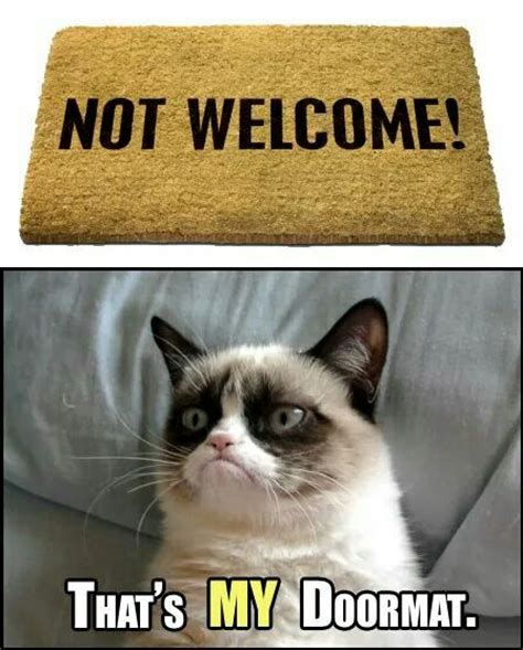 Best Angry Cat Meme - 804 best grumpy cat images on pinterest grumpy cat funny kitties and hilarious