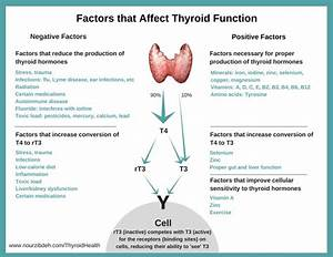 Thyroid Health  The Basic Facts Your Doctors Are Missing