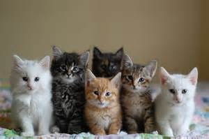 6 cats the itty bitty kitty committee all together now