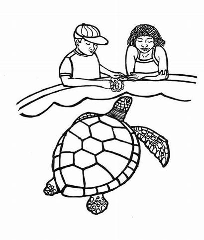 Turtle Coloring Sea Feeding Pages