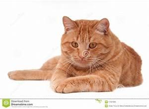 Stalking Cat Royalty Free Stock Photo - Image: 17327685