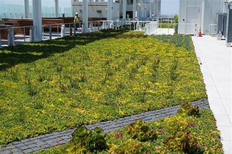 terrazza giardino pensile esempio di giardino pensile estensivo sulla terrazza i